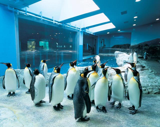 1.長崎ペンギン水族館